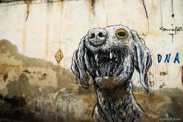 Dog Graffito, Bethlehem