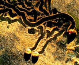 Snail Trail 5